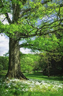 Wildflowers Under The Old Oak Tree Poster by Carolyn Derstine