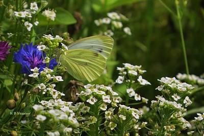 Wildflowers With Pieris Rapae Poster