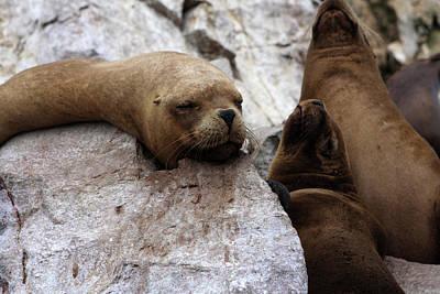 Wildlife Of The Ballestas Islands Poster by Aidan Moran