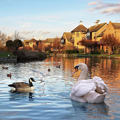 Wildlife On The River Square Poster by Gill Billington