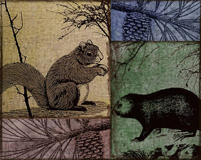 Wildlife Patchwork Squirrel Poster by Mindy Sommers
