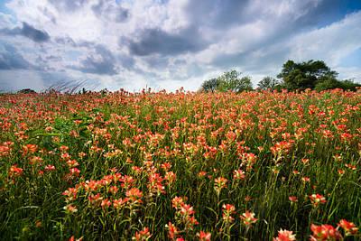 Wildly Blooming -indian Paintbrush - Texas Poster by Ellie Teramoto