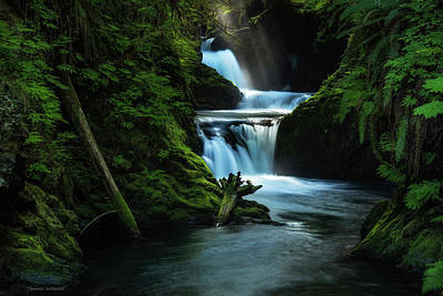 Poster featuring the photograph Lush Willaby  by Expressive Landscapes Fine Art Photography by Thom