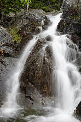 Willey Brook Falls - White Mountains New Hampshire Usa Poster