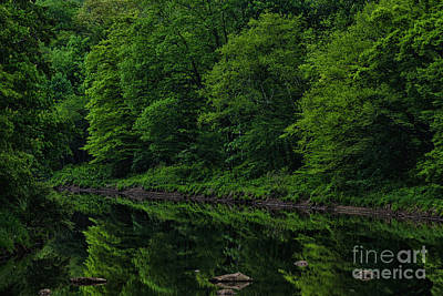 Williams River Spring Reflections Poster