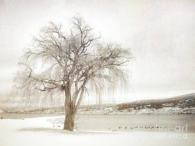 Willow Tree In Winter Poster by Tara Turner