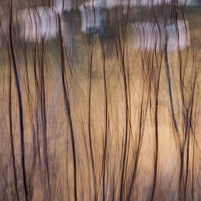 Willows In Winter Poster