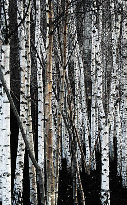 Poster featuring the digital art Birch by Julian Perry