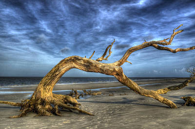 Wind Bent Driftwood Poster by Greg and Chrystal Mimbs
