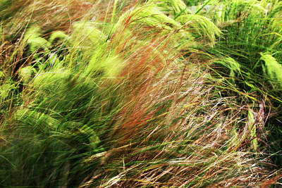 Windblown Grasses Poster by Nareeta Martin