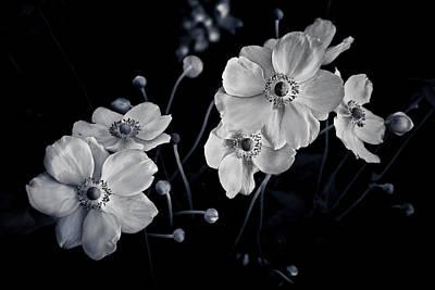 Windflowers Encore Poster by Maggie Terlecki