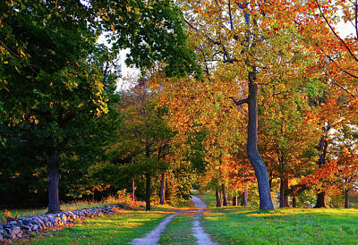 Winding Road In Autumn Poster