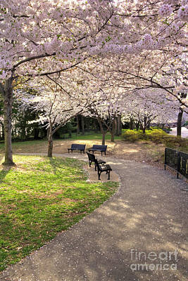 Winding Trail To The Tidal Basin Poster