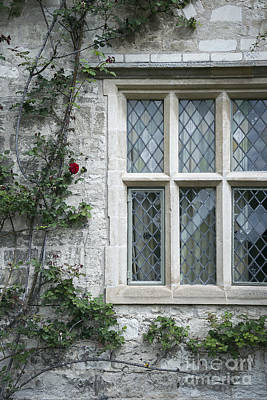 Window And Rose Poster by Svetlana Sewell