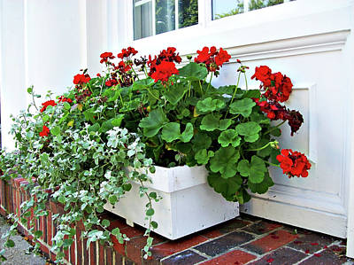 Window Boxes Of Rockport Ma1 Poster