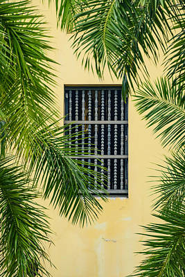 Window With Palm Leaves Poster