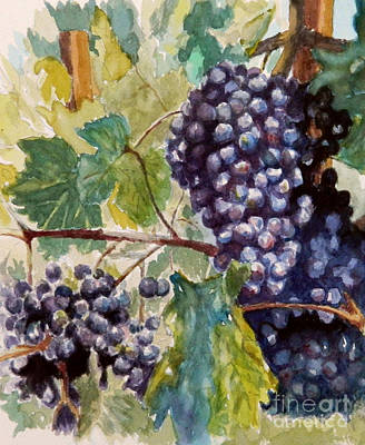 Wine Grapes Poster