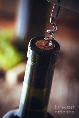 Wine In Wine Cellar Poster