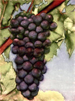 Wine On The Vine Poster by John K Woodruff