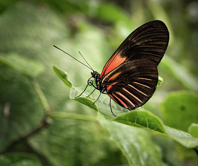 Wings Of The Tropics Butterfly Poster