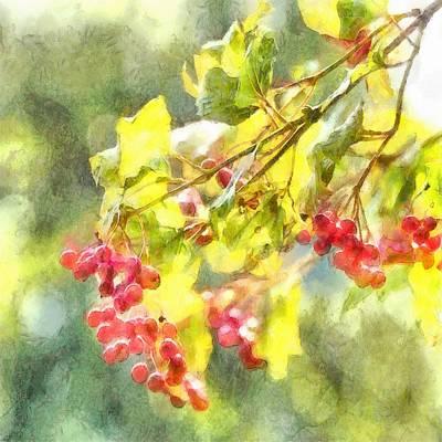 Winter Berries Watercolor  Poster