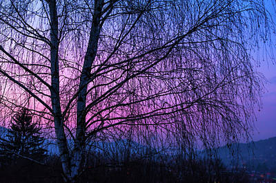 Winter Birch Tree Poster by Jenny Rainbow