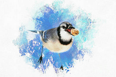 Poster featuring the photograph Winter Bluejay by Darren Fisher