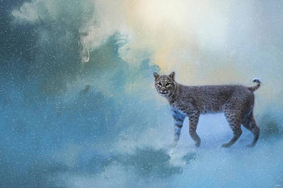 Winter Bobcat Poster by Jai Johnson