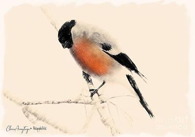 Winter Bullfinch Poster