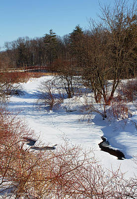 Winter Creek Lined With Red Osea Dogwood Poster by Barbara McMahon