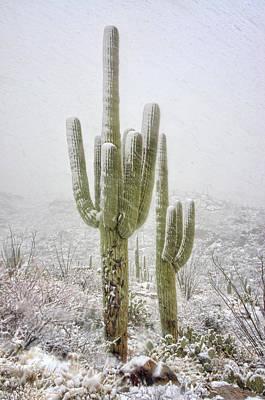 Winter Day In The Desert Southwest  Poster by Saija Lehtonen