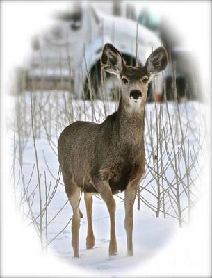 Winter Deer On The Tree Farm Poster