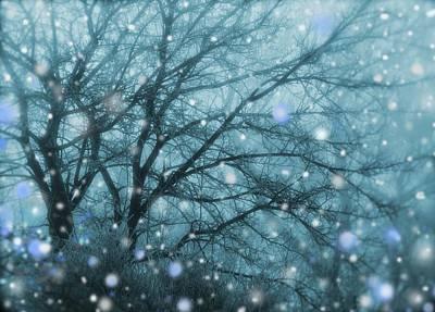 Winter Evening Snowfall Poster