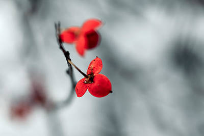 Winter Flower Poster by Todd Klassy