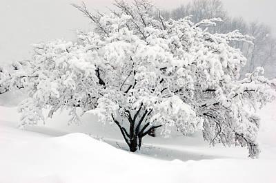 Winter Fluff Poster
