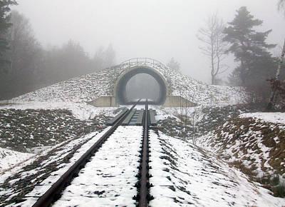 Winter Fog Poster