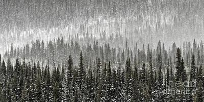 Winter Forest Poster by Brad Allen Fine Art