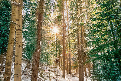 Winter Forest Sunshine Poster
