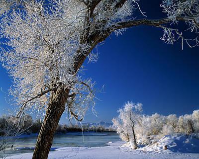Winter Frost Poster by Leland D Howard