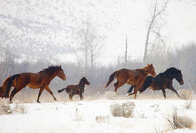 Winter Gallop Poster by Mike  Dawson
