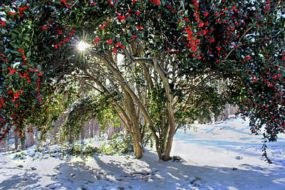 Poster featuring the photograph Winter Holly by Jessica Brawley