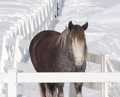 Winter Horse Poster by Debbie Stahre