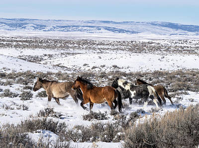 Winter In Sand Wash Basin - Wild Mustangs On The Run Poster