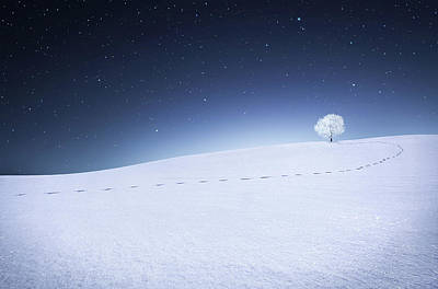 Poster featuring the photograph Winter Landscape by Bess Hamiti