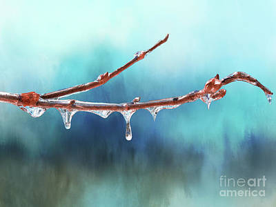 Winter Magic - Gleaming Ice On Viburnum Branches Poster