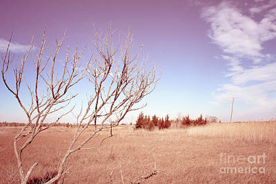 Poster featuring the photograph Winter Marshlands by Colleen Kammerer