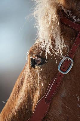 Winter Mustang Eye Poster