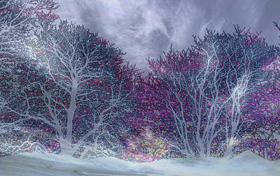 Poster featuring the photograph Winter Purple by Nareeta Martin