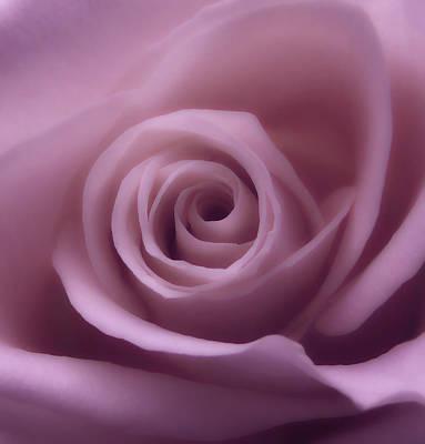 Winter Rose 7 Poster