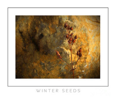 Winter Seeds Poster Poster by Mike Nellums